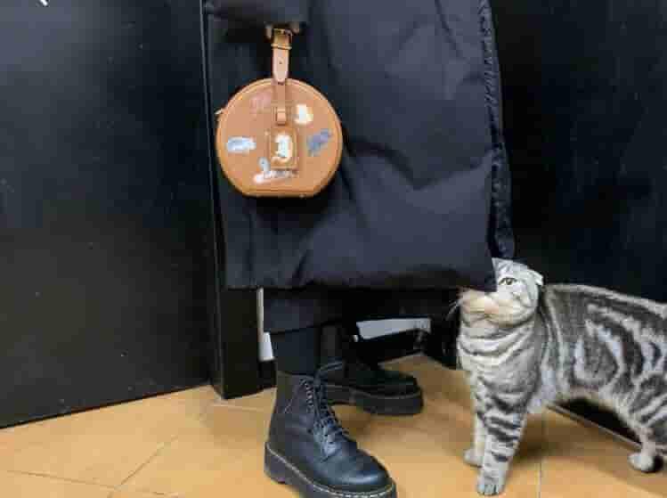 LV M52972 19限量PETITE猫犬图案圆饼包手提斜挎单肩女包